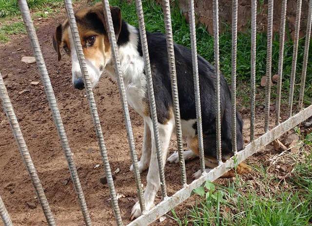 Cadelas, vítimas de maus-tratos, são resgatadas na Cidade Alta, em Alegrete, RS
