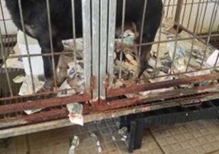 MP apura denúncia envolvendo Centro de Bem-Estar Animal de Canoas, RS