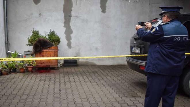Urso é morto a tiros pela polícia na Romênia