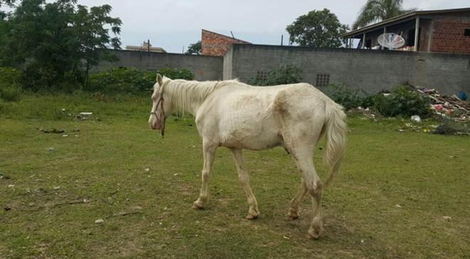 Cavalo sofre maus-tratos em Araranguá, SC