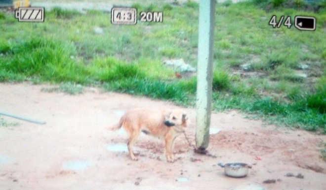 Polícia Civil procura lar para cão resgatado de maus-tratos em Balneário Rincão, SC