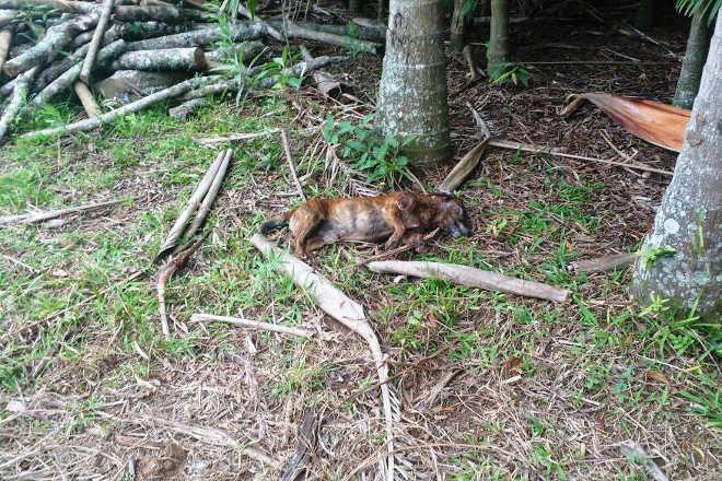 Homem é encaminhado à delegacia por matar cachorro no Morro Comprido, em Forquilhinha, SC
