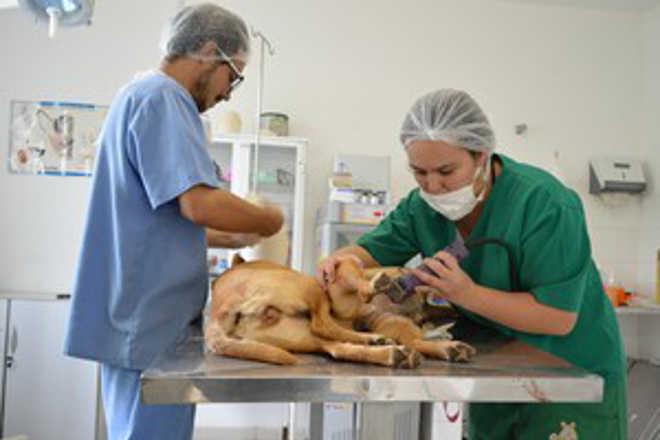 Arujá (SP) cadastra cães machos e fêmeas para castração gratuita
