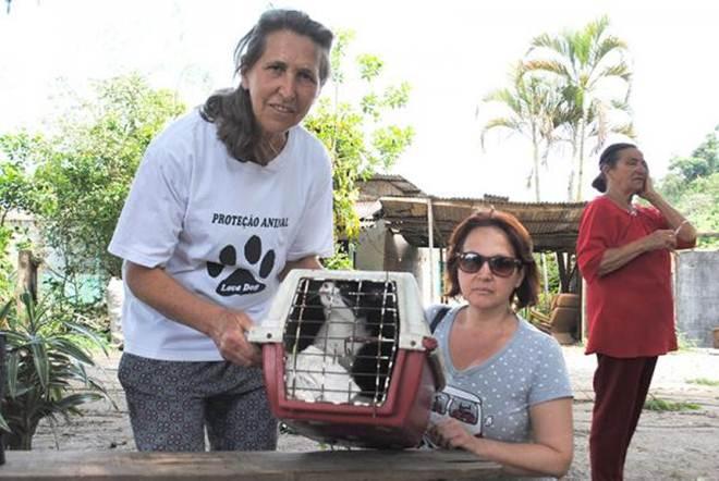 Protetoras pedem ajuda para manter animais recolhidos de áreas desapropriadas em Arujá, SP
