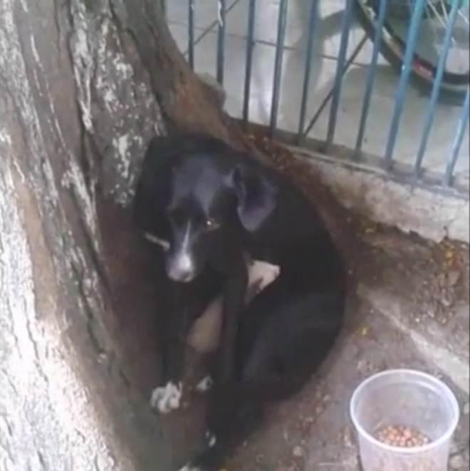 Cadela de rua amamenta filhote de gato em Guaratinguetá, SP; veja vídeo