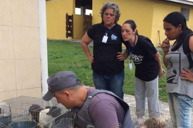 Canil clandestino em Itapetininga (SP) era usado como 'loja de cães', diz polícia
