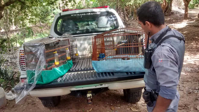 Polícia Militar Ambiental resgata pássaros nativos em Marília, SP