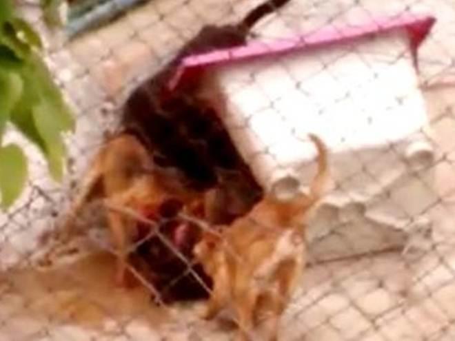 Moradores alegam abandono de canil; vídeo mostra cães brigando