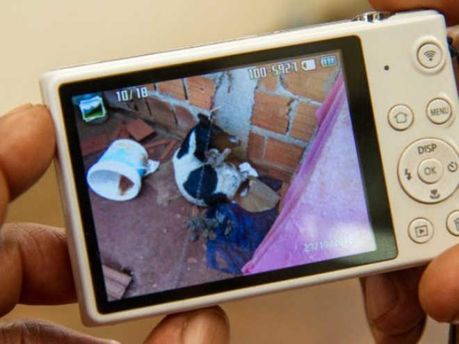 Cão morre enforcado em corrente e tutora é detida em Araraquara, SP