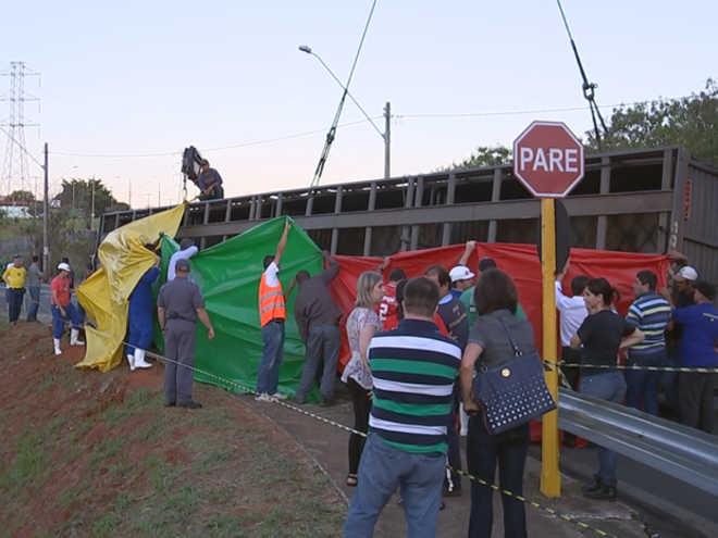 Ativistas protestam contra abate de bois que sobreviveram a acidente