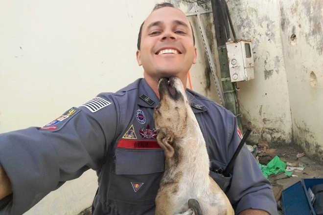 Bombeiros falam sobre salvamentos de animais