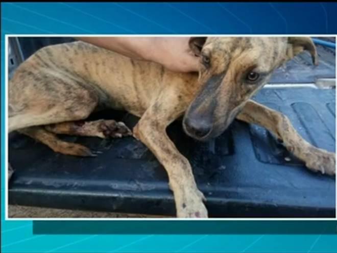 Cadela que sofria maus-tratos de tutor é resgatada em Araguaína, TO