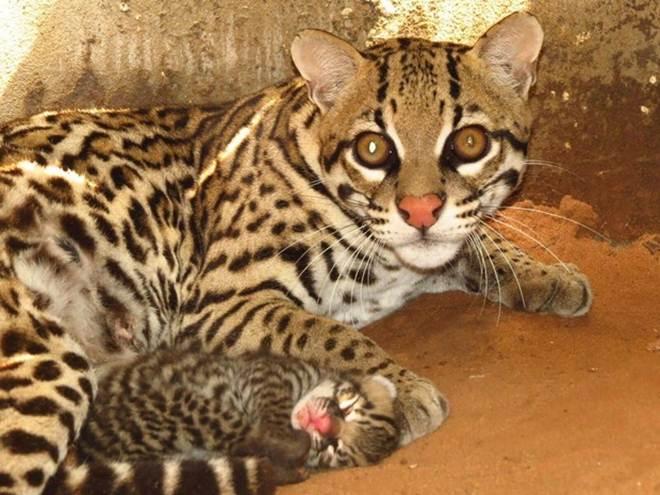 Animais silvestres são devolvidos à natureza após receberem tratamento, em TO