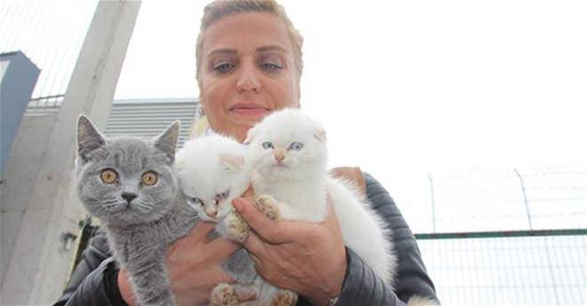 Ativistas compram gatinhos apreendidos na fronteira entre Turquia e Bulgária em um leilão