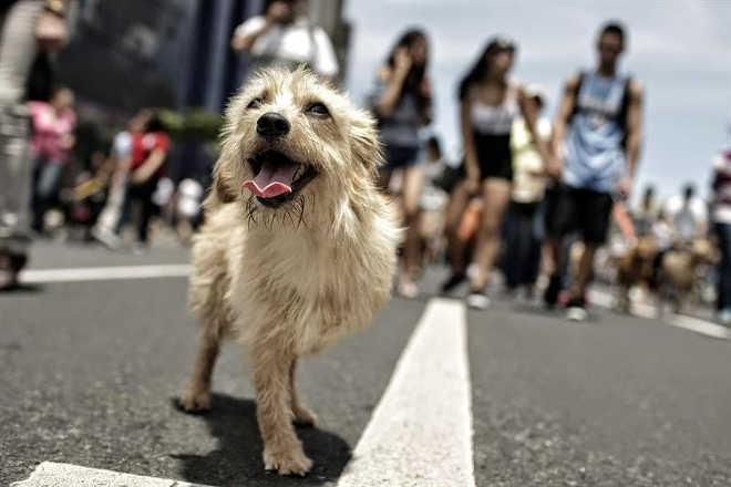 Uruguai começa a aplicar lei de 2009 que penaliza maus-tratos a animais
