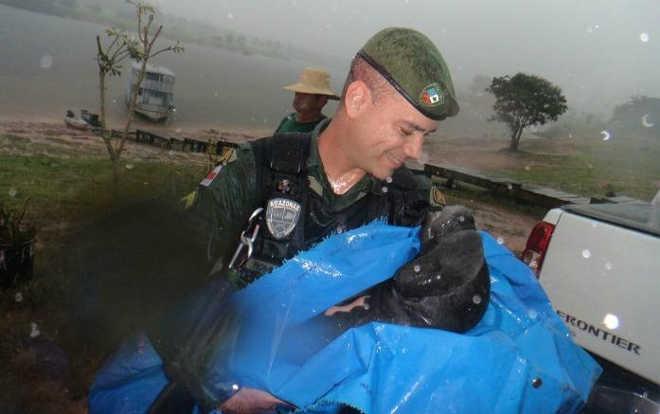 Filhote de peixe-boi é resgatado em lago no Careiro da Várzea, em Manaus, AM