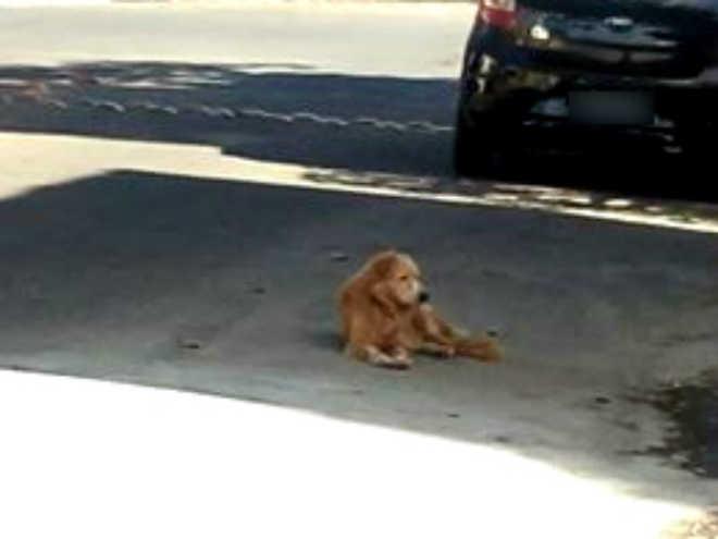Abandonado, cão espera na porta de casa há 15 dias por retorno dos tutores