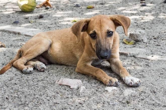 Cem animais são resgatados desnutridos e doentes em 'santuário'
