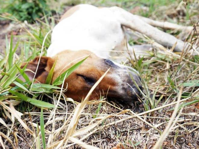 Polícia investiga seguidas mortes de cães em Santo Antônio do Monte, MG