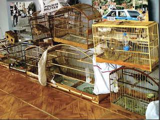 Casal realizava tráfico de animais de Ubá (MG) e região