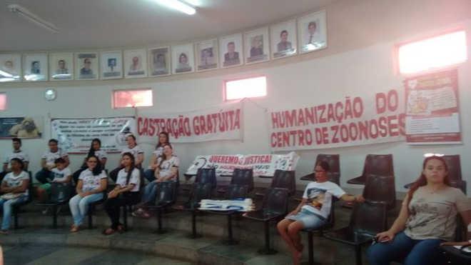Aprovada a lei de castração gratuita de cães e gatos em Picos, PI