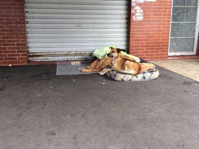 Morador de rua morre em Curitiba (PR) e cão não o abandona