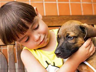 Feira de adoção de animais acontece neste fim de semana no Taubaté Shopping