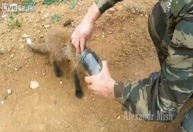 8 atos incríveis de solidariedade para com os animais