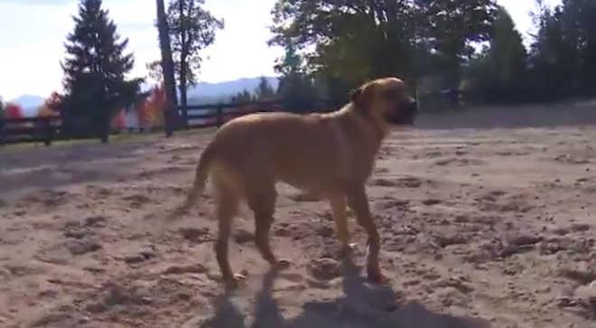 Cachorro sobrevive após ser atingido com flecha de caça