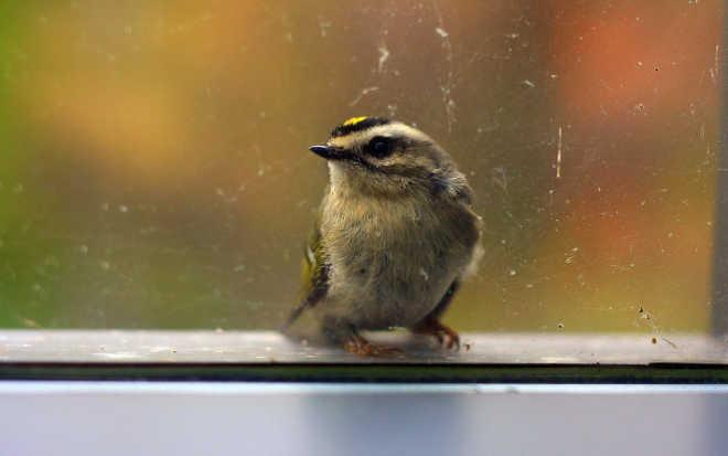 Como deixar suas janelas à prova de pássaros para proteger nossos amigos de penas