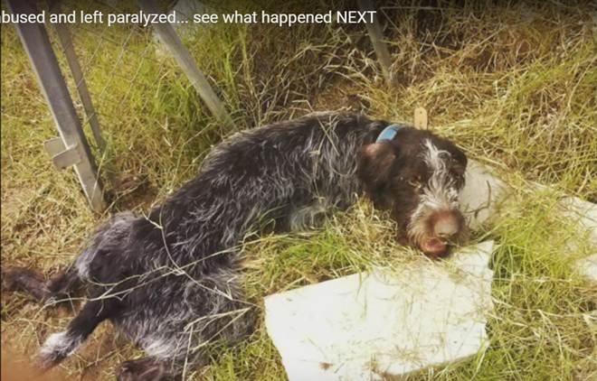 Cão paralisado é abandonado. Agora veja o que acontece quando a equipe de resgate chega