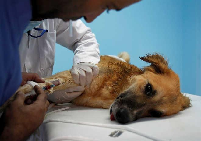 Veterinário condenado a pena de prisão por deitar o cão ferido no lixo