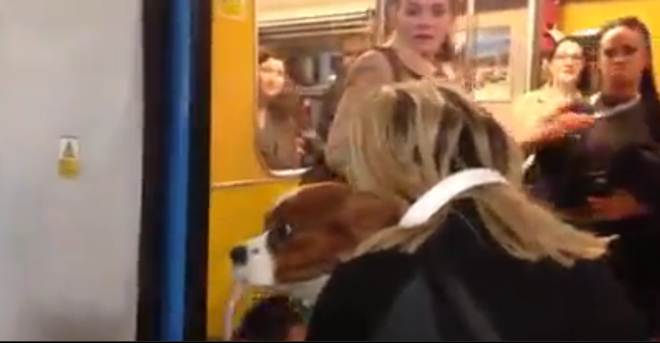Resgatado cão que caiu entre plataforma e comboio em Londres