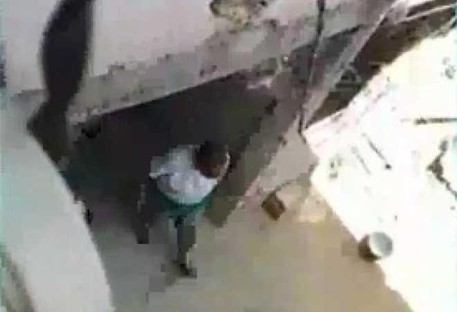Cão é espancado a pauladas por mulher em Belo Horizonte, MG