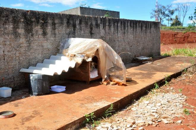 Moradores fizeram abrigo na rua para cachorro não ficar abandonado em Campo Grande, MS