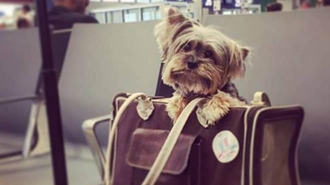 O que você precisa saber para levar seu animal em uma viagem