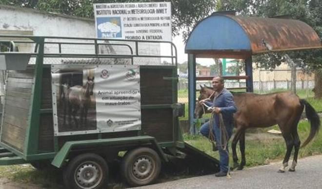 Polícia Civil resgata cavalo em situação de maus-tratos na Estrada da Ceasa, em Belém, PA