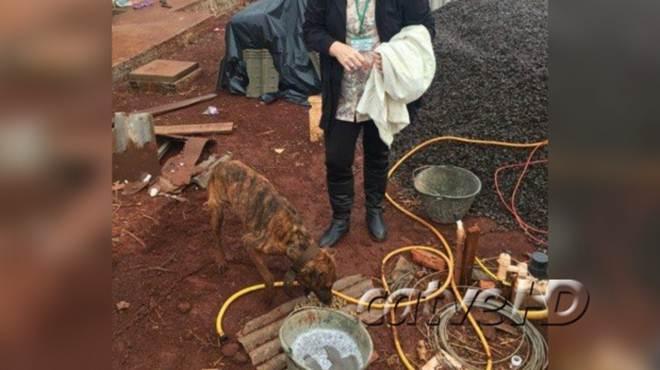 Animais sofriam maus-tratos em canil clandestino de Toledo, PR
