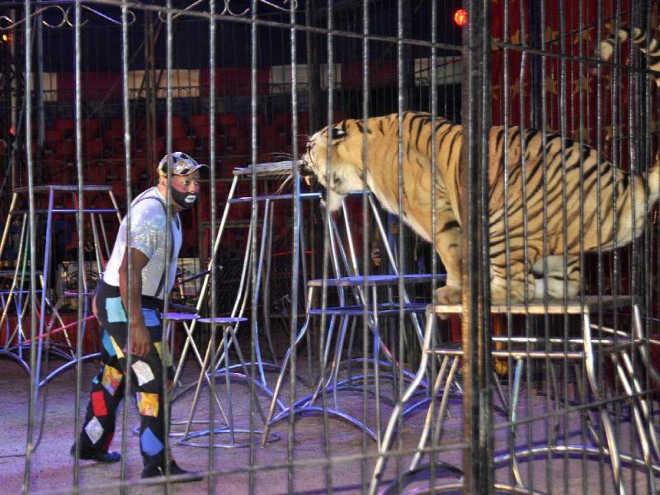 Aprovado em primeiro turno anteprojeto que proíbe animais em circo no Panamá
