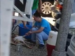 Homem mata e esfola cabrito na rua em Portugal