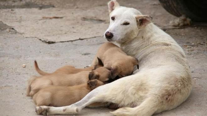 Dia do Animal: 500 crimes de maus-tratos em oito meses em Portugal