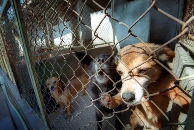 Portugal: Lei que permite impunidade nos maus-tratos a animais põe deputados sob fogo