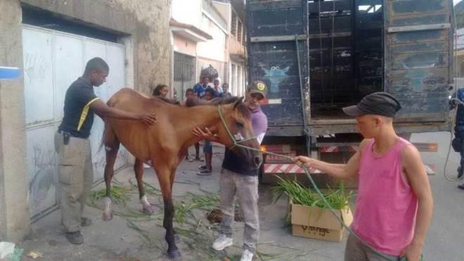 Égua abandonada é resgatada pelo Grupamento de Proteção ao Meio Ambiente, em São Gonçalo, RJ