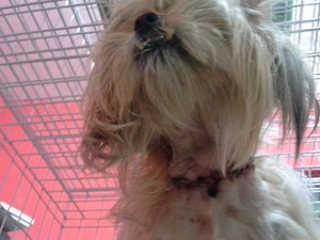 Moradores encontram cães e gatos degolados em Candiota, RS