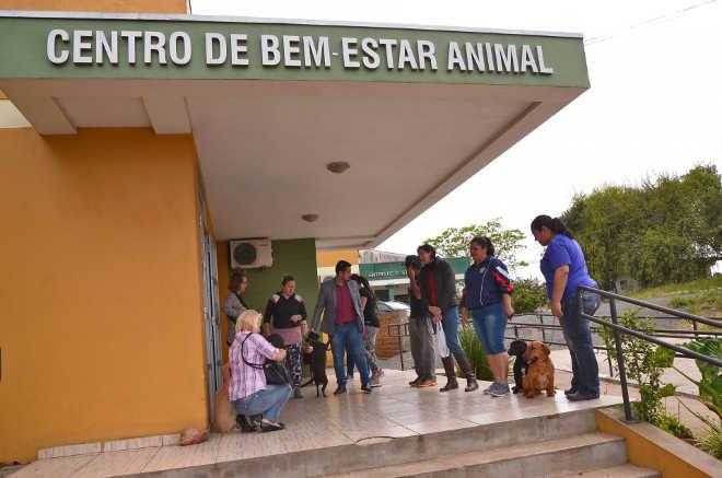 Mutirão castra 140 cães e gatos em um dia em Canoas, RS