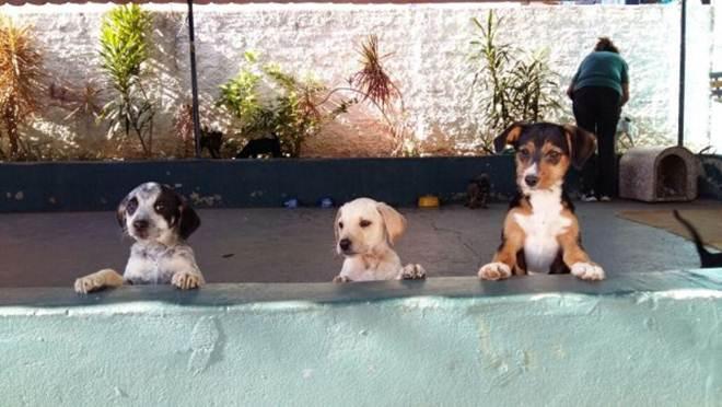 Quinze animais encontram um novo lar graças à feira de adoção realizada pela ASA e pelo Colégio Objetivo em Cabreúva, SP