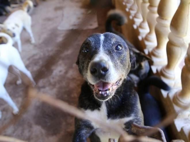 ONG faz campanha para construir um santuário de animais no interior de SP