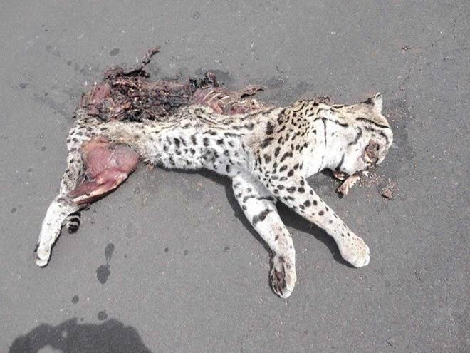 Com destruição ambiental, animais silvestres fogem para Teresina, PI