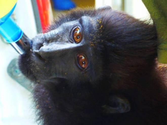 8 santuários animais pouco conhecidos que irão inspirar você