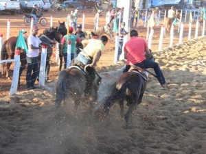 Justiça acolhe ação civil e suspende de vaquejada em Palmeira dos Índios, AL